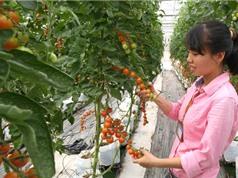 Làm giàu bằng nông nghiệp công nghệ cao