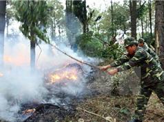 Bắc Bộ và Bắc Trung Bộ có nguy cơ cháy rừng cao