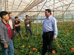 Người dân Lâm Hà làm giàu từ hoa, rau công nghệ cao