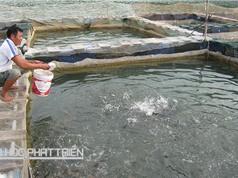 Thoát nghèo nhờ nuôi cá trong hồ thủy điện