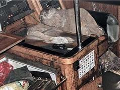 Kỳ lạ quá trình ướp xác tự nhiên của thuỷ thủ trên tàu ma
