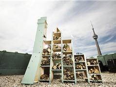 Toronto sắp trở thành thành phố ong