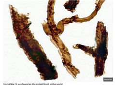 Phát hiện loại nấm cổ thời sơ khai của sự sống