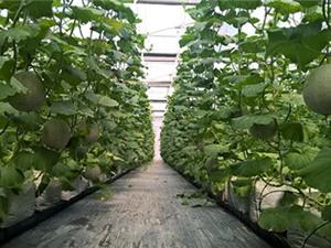 Ứng dụng CNTT vào sản xuất nông nghiệp để cạnh tranh