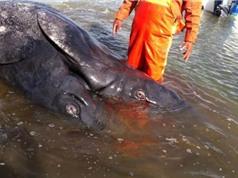 Mexico phát hiện xác thủy quái 2 đầu kỳ lạ
