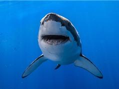 """Chiêm ngưỡng vẻ đẹp của """"sát thủ"""" đáng sợ bậc nhất đại dương"""