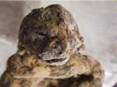 Hồi sinh sư tử hang động sống từ kỷ Băng Hà