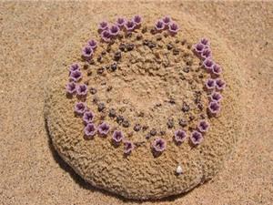 Vẻ đẹp khó tin ở loài hoa nở trên cát