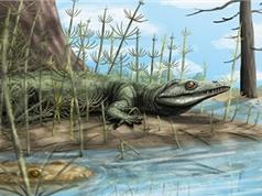 Hóa thạch 250 triệu năm tuổi của tổ tiên cá sấu