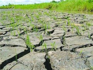 Phê duyệt Chương trình KHCN ứng phó với biến đổi khí hậu