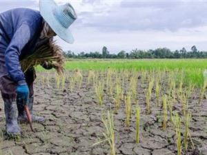 Đông Nam Á lo thiếu gạo vì El Nino