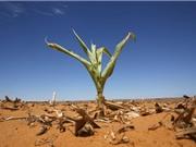 El Nino có thể gây khủng hoảng lương thực kéo dài đến 2017