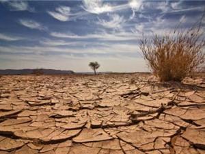 Biển đổi khí hậu
