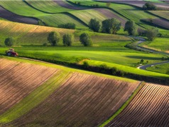 Ngỡ ngàng trước vẻ đẹp kỳ ảo của các cánh đồng ở châu Âu