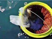 Clip: Phát minh sáng tạo giúp làm sạch đại dương
