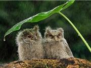 Những bức ảnh về động vật hoang dã đẹp nhất trong tuần qua