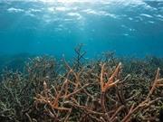 Nguy cơ axit hóa các đại dương
