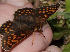 Sự thật ít biết về những con bướm đẹp lung linh
