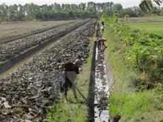 Khô hạn giúp nông dân Cà Mau trúng lớn mùa đậu xanh