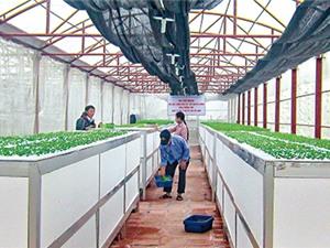 Thái Bình: Nâng cao giá trị nông sản nhờ công nghệ
