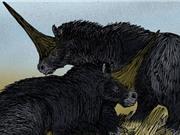 Tìm thấy dấu vết loài kỳ lân Siberia