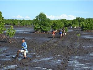 Rừng ngập mặn Đông Nam Á đang bị thu hẹp