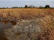 Độ mặn ở Nam Bộ sẽ tăng trở lại, hạ lưu Mekong không có mưa