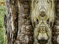 """Chiêm ngưỡng những """"quái"""" cây kỳ lạ nhất thế giới"""
