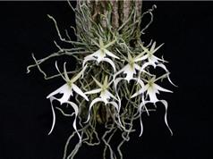 Top 10 loài hoa đẹp và hiếm nhất thế giới