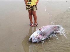 Những nguyên nhân có thể khiến cá chết hàng loạt