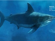Vì sao loài cá mập lớn nhất thế giới tuyệt diệt?