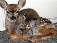 Những tình bạn kỳ lạ nhất thế giới động vật