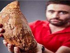 Phát hiện chiếc răng 5 triệu năm của cá voi khổng lồ