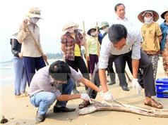 Những nguyên nhân dẫn tới hiện tượng hải sản chết đột ngột