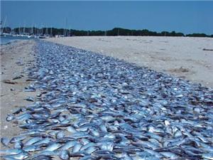 Cục Khảo sát Địa chất Mỹ lý giải hiện tượng cá chết hàng loạt