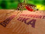 Việt Nam chính thức hết dịch do virus Zika