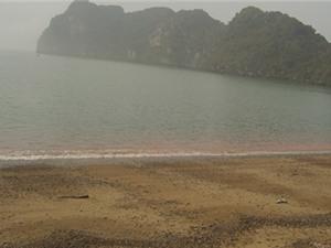 Chuyên gia phản bác nguyên nhân thuỷ triều đỏ làm chết cá