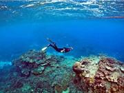 Sụt giảm oxy trong đại dương có thể dẫn đến thảm họa toàn cầu