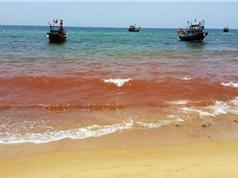 Xuất hiện vệt nước đỏ 1,5km dọc bờ biển Quảng Bình