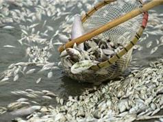 Vụ cá chết bất thường ở miền Trung: Chính phủ giao Bộ Tài nguyên và Môi trường phát ngôn