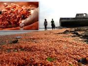 Thủy triều đỏ: Thảm họa môi trường khó kiểm soát