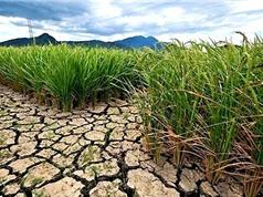 El Nino có thể chấm dứt vào cuối tháng 6