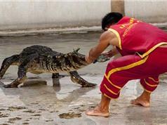 Clip: Tai nạn hài hước khi biểu diễn xiếc cá sấu