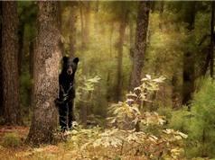 Chùm ảnh vẻ đẹp của thú rừng qua ống kính nhiếp ảnh