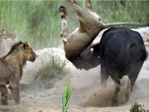 Clip: Những cuộc chiến sinh tử đáng sợ của động vật hoang dã