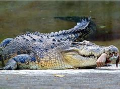 Những khám phá bất ngờ về loài cá sấu