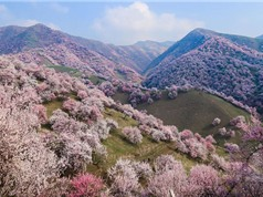 Chùm ảnh xứ sở thần tiên tràn ngập hoa ở Trung Quốc
