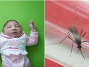 Brazil công bố bằng chứng Zika lây truyền qua muỗi Aedes aegypti