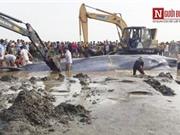 Hàng ngàn người dân xem giải cứu cá voi khổng lồ mắc cạn ở Nghệ An
