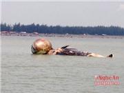 Hình ảnh mới nhất về cá voi chết ở Nghệ An
